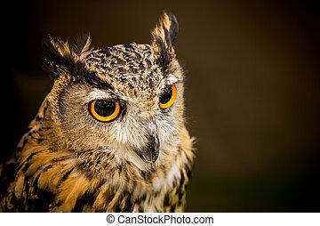 The owl looks beautiful.