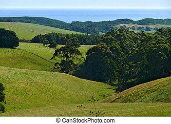 The Pacific coast. Australia. State of Victoria. Landscape nature. Lush green mountain pasture.