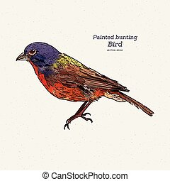The painted bunting (Passerina ciris) is a species of bird...