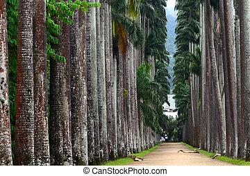 The Palm alley in The Botanical Garden in Rio de Janeiro