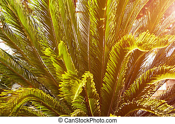 The palm leaves in evening sun light