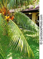 The palm tree at luxury hotel, Bentota, Sri Lanka
