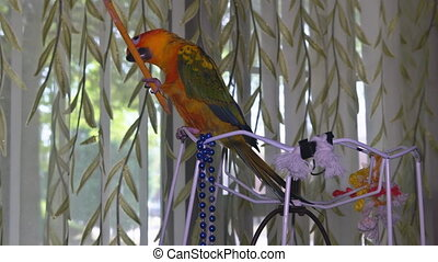 The parrot sits and plays with a pencil - The parrot sits in...