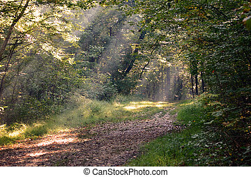 The Path Home - Sunbeam lit path in the forest
