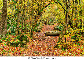 The path in the autumn forest, covered with fallen bright leaves