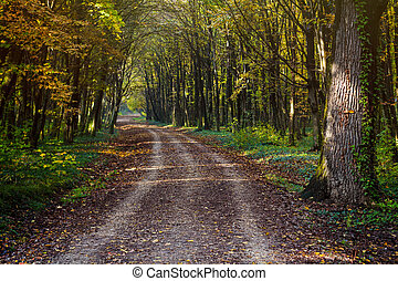 The path in the woods in autumn