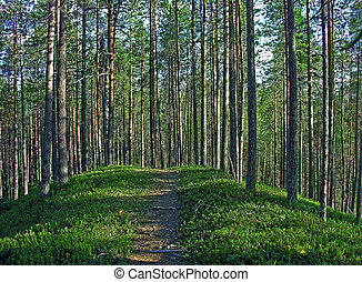 The path in the woods
