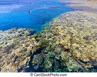 The people snorkeling in blue waters above coral reef on red sea in Sharm El Sheikh, Egypt