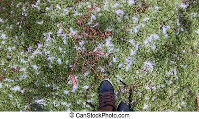 The person walks in sneakers on the frozen The frozen green ...