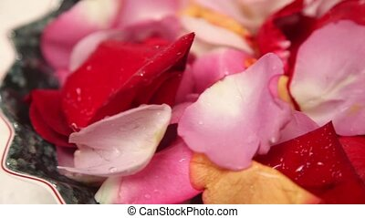 The petals of roses covered with water drops