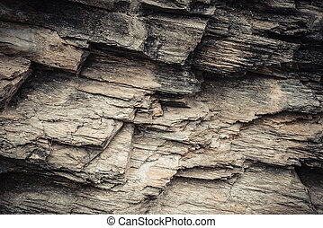 The Petrified Wood Texture Background,