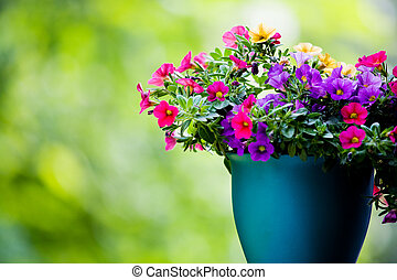 the petunia flower in front of garden