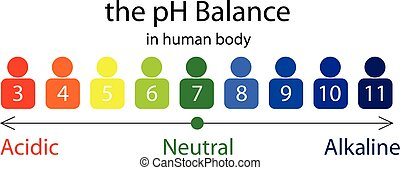 The PH balance scale chart in a human body vector...
