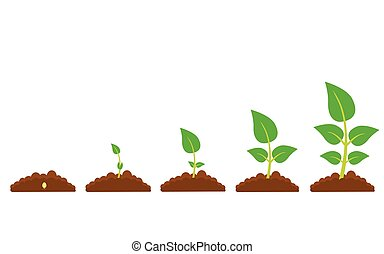 The phases of plant growth - Set of illustrations with ...