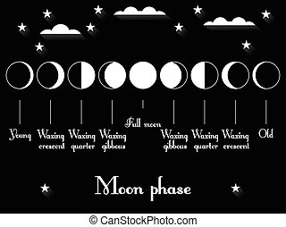 The phases of the moon. Vector