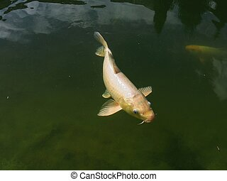 The photo of a fish floating near the surface