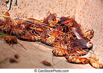 Cockroaches to dead and combination in bin. - The picture ...