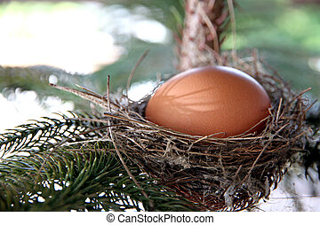 Eggs in nest on the tree.