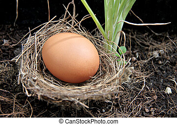 Eggs in nests placed on ground.