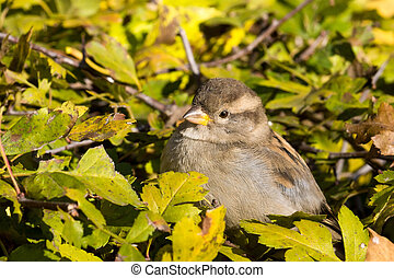 sparrow sitting on a bush