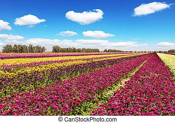 The picturesque kibbutz field of flowering garden...