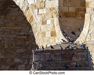 The pigeon on the bridge in romanesque bridge
