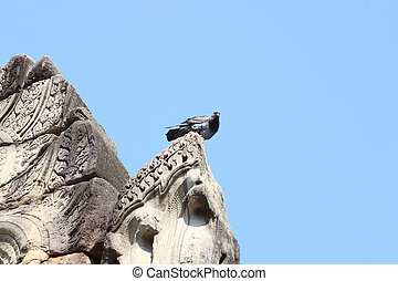The pigeon sit on ancient stone