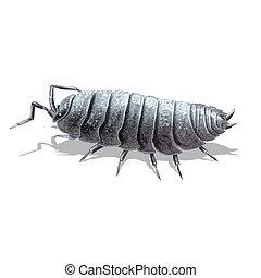 the pill-bug