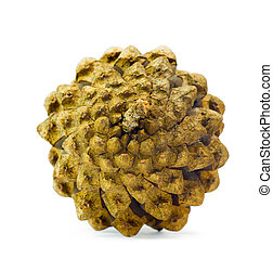 The pine cone on a white background