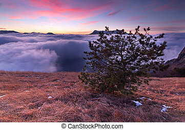 The pine over the clouds in mountains