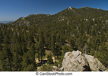 The Pines, San Jacinto
