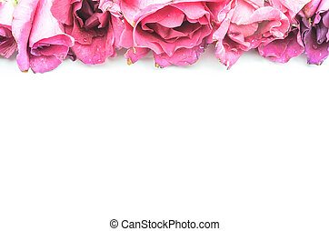 The Pink Rose.