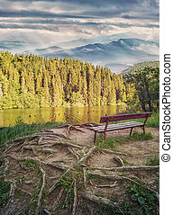 The place for rest. A quiet place for reflection in the park near the lake. Calm concept. Roots of trees on the ground