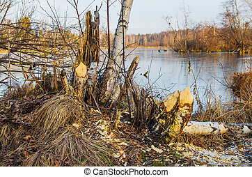 The place is visited by beavers