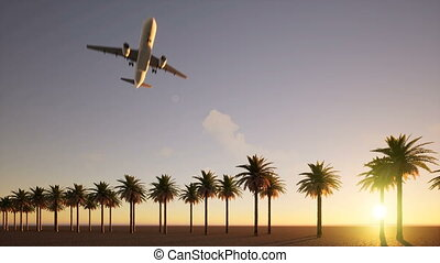 The plane flies over the avenue of palm trees 4k