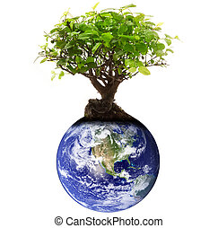 planet Earth with tree on white background