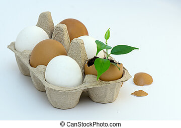 the plant grew in an egg in the ground