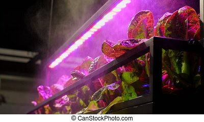 The plants under multicolor led lights with automatic...