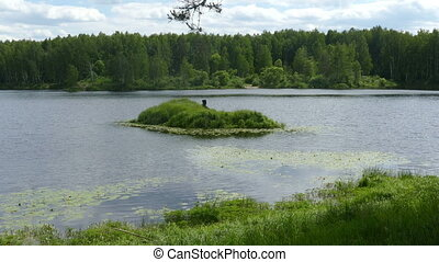 The pond and the island in the summer forest in Russia