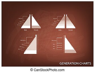 The Population Pyramids Graphs with 4 Generation