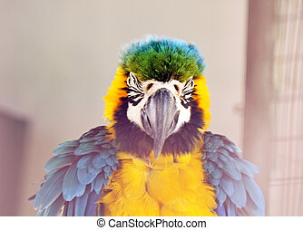 The potrait of Blue and Gold Macaw