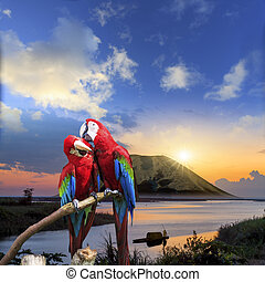 The potrait of Blue & Gold Macaw