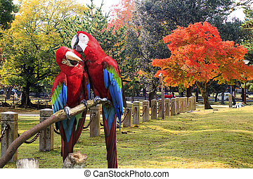 The potrait of Blue & Gold Macaw for adv or others purpose ...