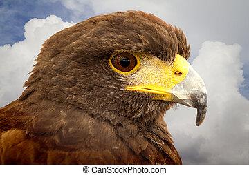 Royal Eagle?s head.