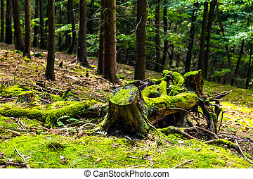 The primeval forest with stump
