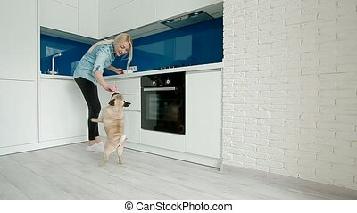 The pug dancing for the food on the kitchen. Owner teasing...