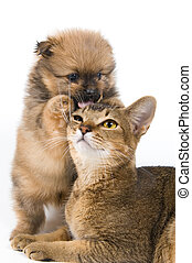 The puppy and kitten on a neutral background