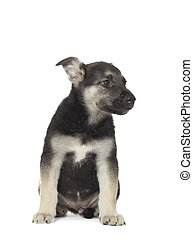 The puppy on a white background