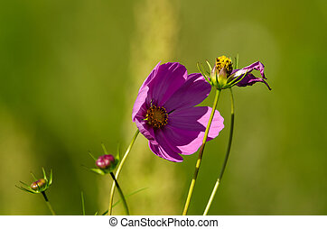 the purple flower on a green background