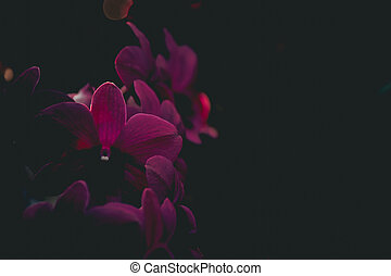 The purple orchid flower with black background , digital effect abstract for background